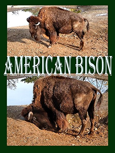 Watch American Bison (2017) Online