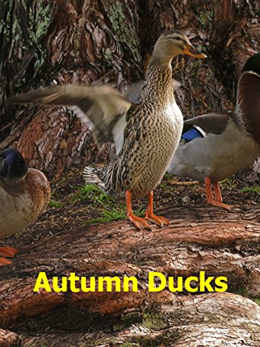 Watch Autumn Ducks (2016) Online