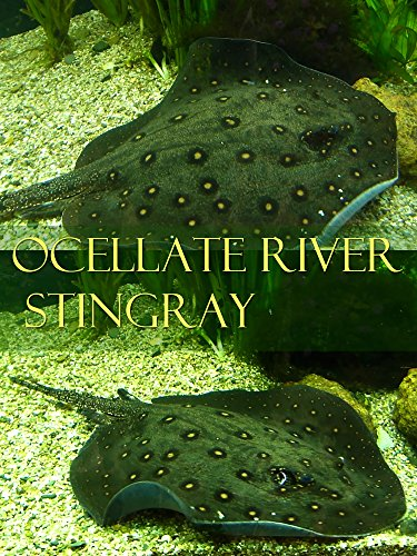Watch Ocellate river stingray (2017) Online
