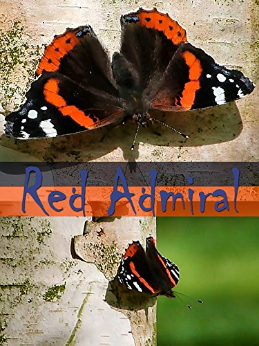 Red Admiral (2016) - Amazon Prime Instant Video
